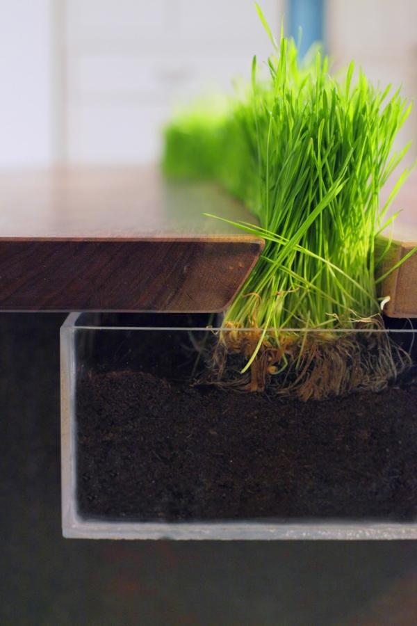 pflegeleichte haustiere emily wettstein eingepflanztes gras