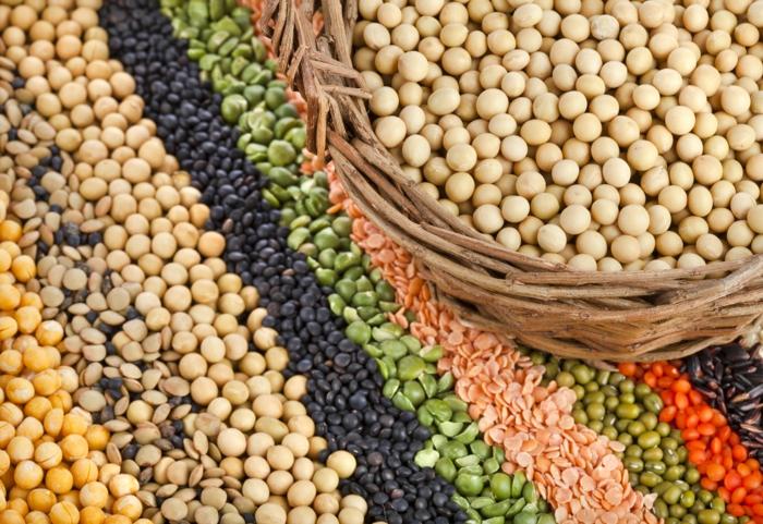 probiotika ballaststoffe bohnen pflanzen