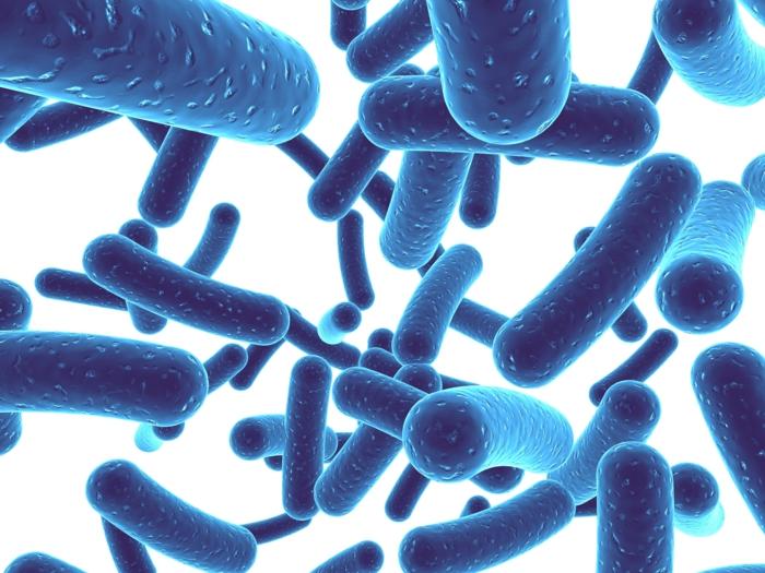 probiotika gute bakterien milchsäurebakterien