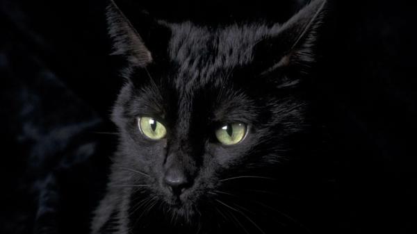 rad des schicksals schwarze katze