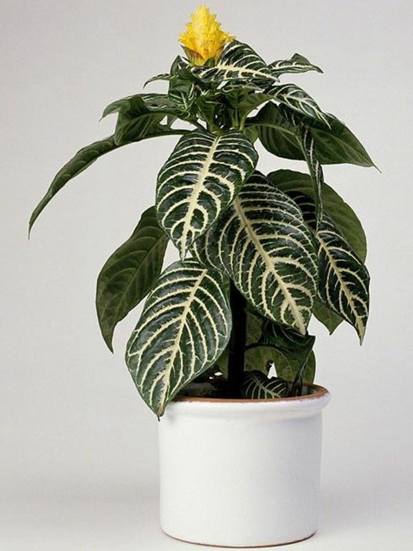 schöne zimmerpflanzen dekoideen garten pflanzen