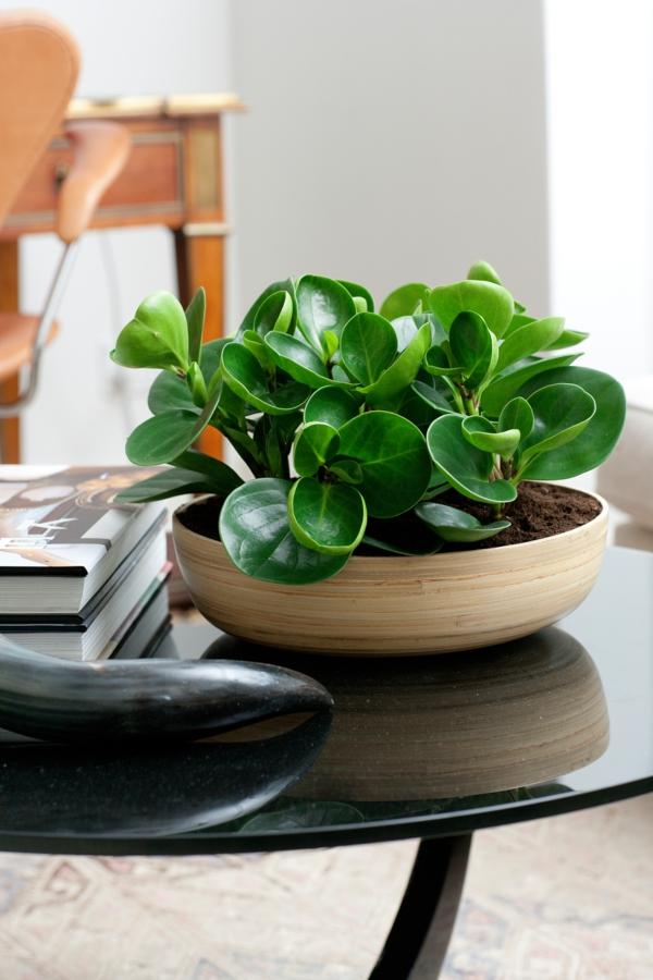 schöne wohnzimmer deko:schöne zimmerpflanzen peperomia wohnzimmer deko ideen