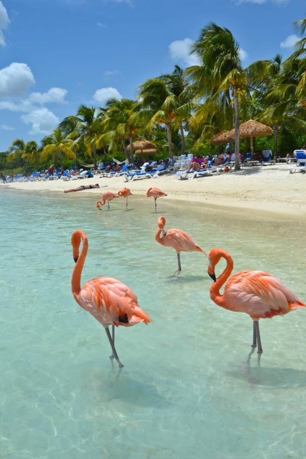 schönste strände Flamingo Beach Renaissance island Aruba