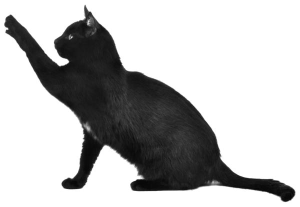 schicksal zeichen aberglaubig schwarze katze