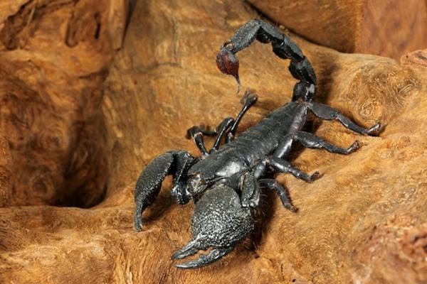 sternzeichen skorpion tier