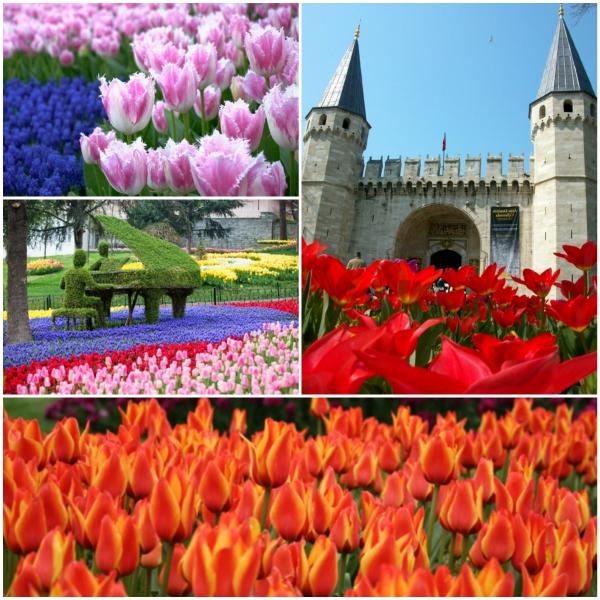 tulpen bilder bunt istanbul emirgan park