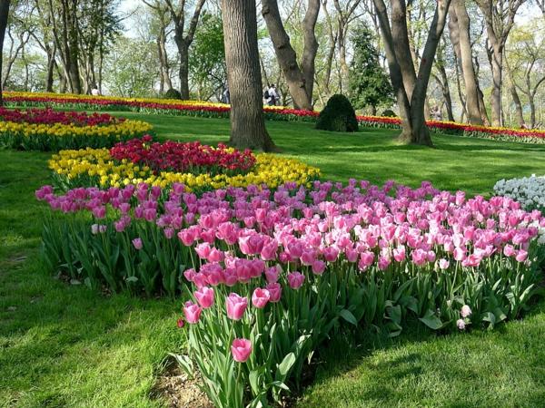 tulpen bilder rosa zart wiese park emirgan