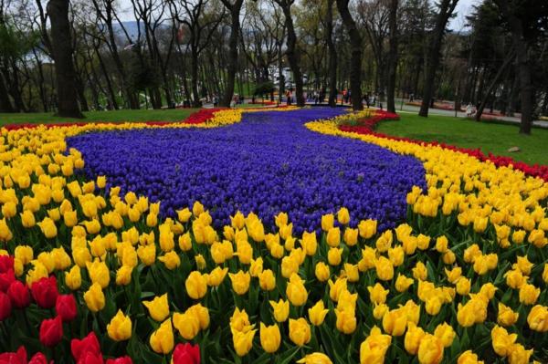 tulpen bilder türkei emirgan festival