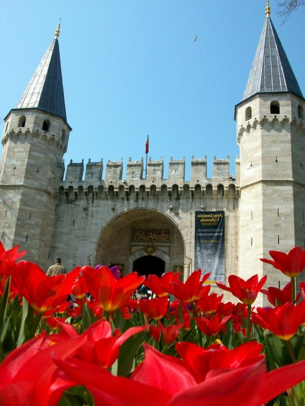tulpen bilder türkei emirgan istnabul festival