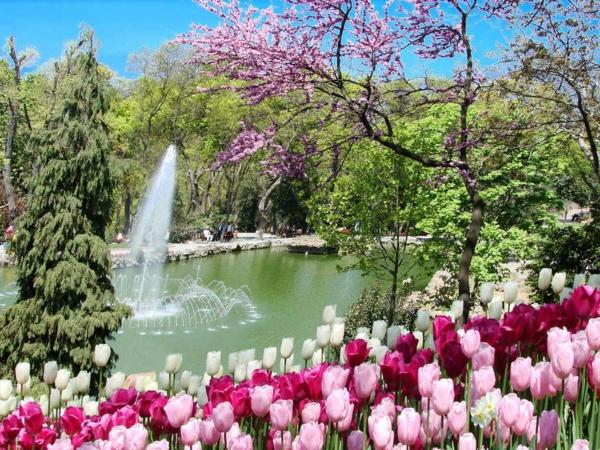 tulpen bilder türkei emirgan springbrunnen