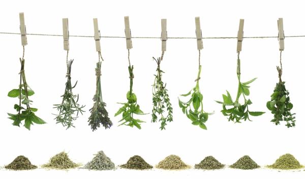 was tun für langes leben kräuter und heilpflanzen