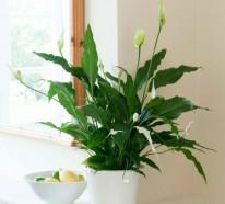 Schöne Zimmerpflanzen – Frische Ideen für die Dekoration im Innenraum