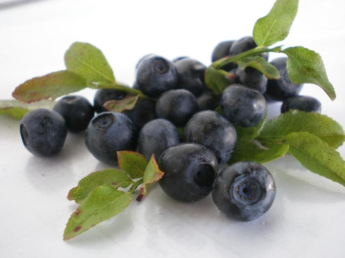 Aroniabeere Apfelbeere pflanze blätter früchte