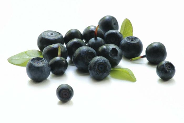 Aroniabeere Apfelbeere pflanze früchte