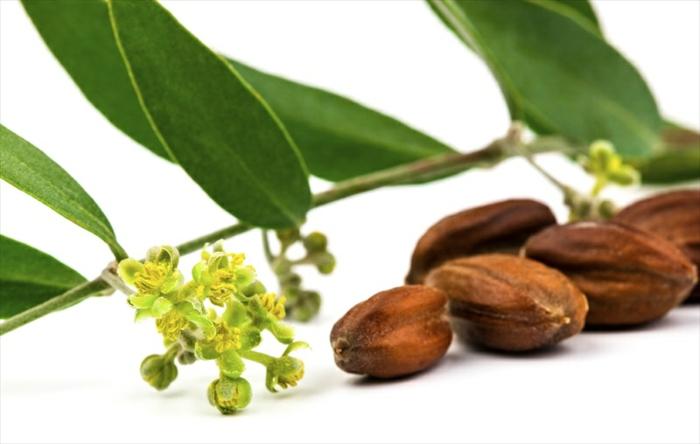 Pflanze Blüten Früchte Jojobaöl Haare Haut Schönheitstipps