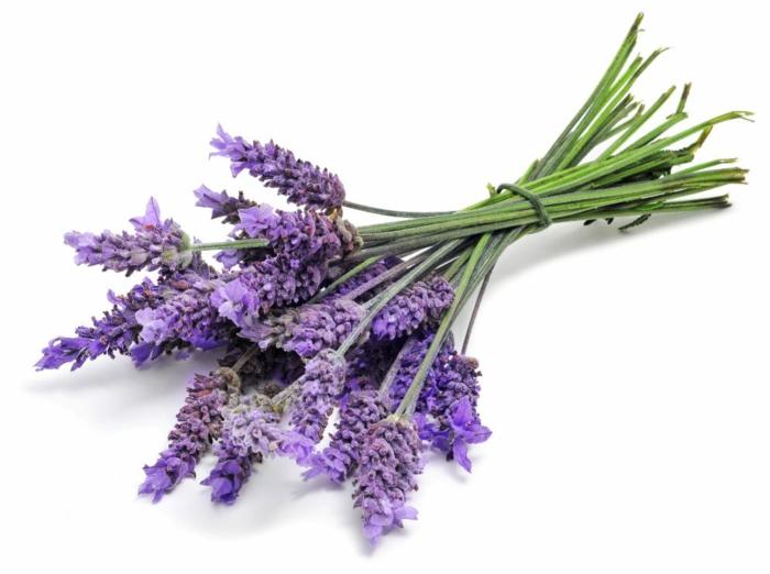 duftöle oregano bio kräuter frischer lavendel