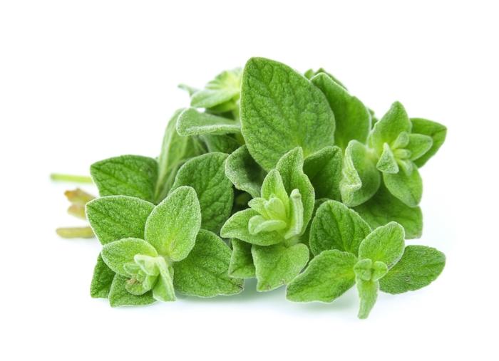 duftöle oregano bio kräuter gesund
