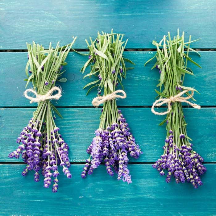 duft-und-schönheit-sommerduft-lavendel