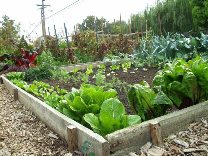 gemüsegarten anlegen – wichtige tipps und tricks für eine reiche, Garten und erstellen
