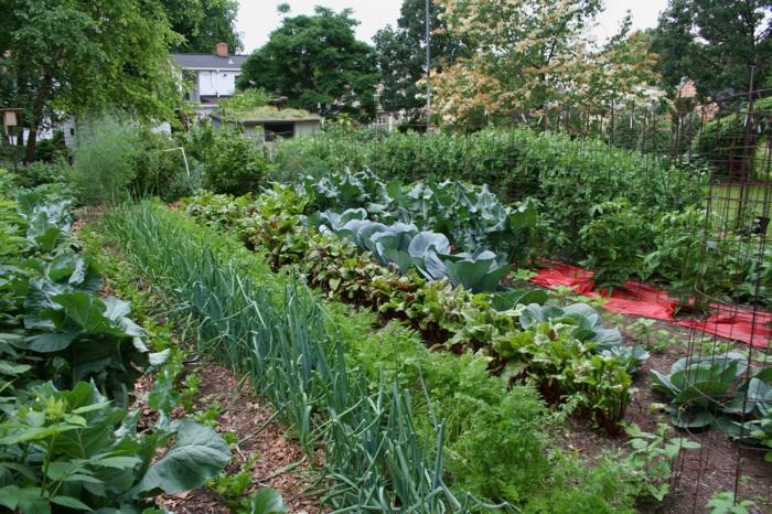 Gemüsegarten Anlegen gemüsegarten anlegen tipps und tricks für anfänger