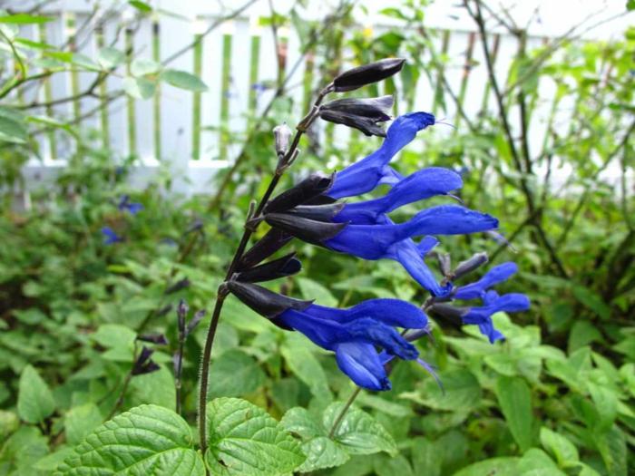Sommerblumen helfen Ihnen, einen Garten voller Farben zu kreieren