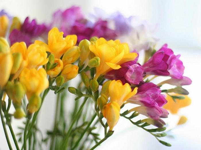 gartenpflanze betörender duft pine gelbe blüten