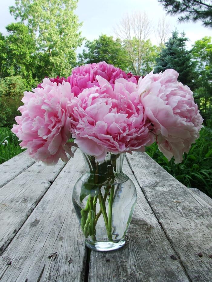 gartenpflanze-rosa-pfingsrosen-tischdeko