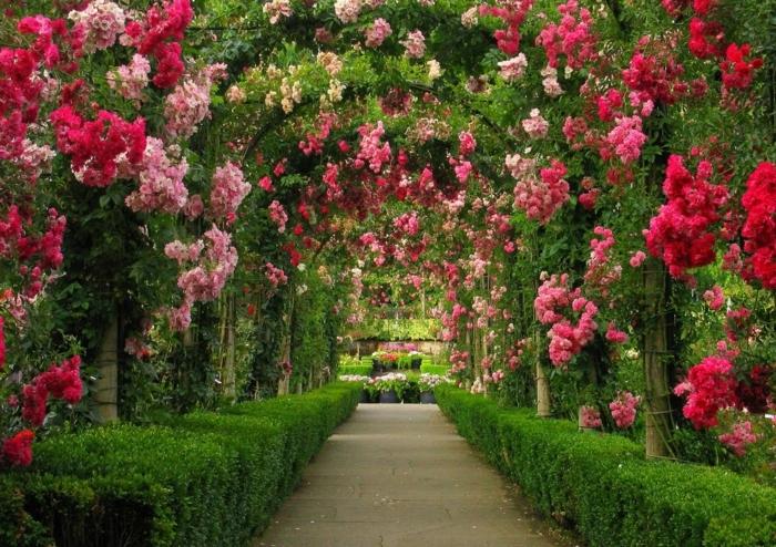 gartenpflanze rosensträucher arkaden garten