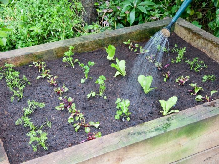 gemüsegarten anlegen tipps gemüse bewässern