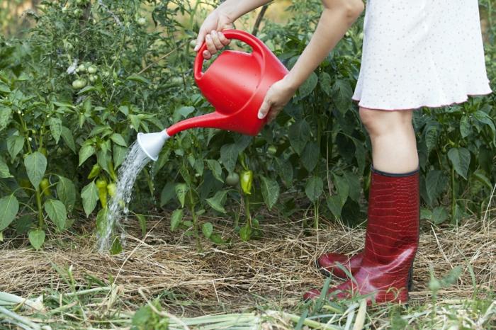 gemüsegarten anlegen tipps tomaten bewässern