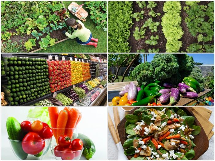 gemüsegarten anlegen tipps und tricks gesundes essen