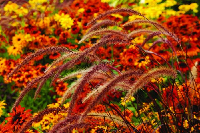 gräser im garten gartenpflege blumen