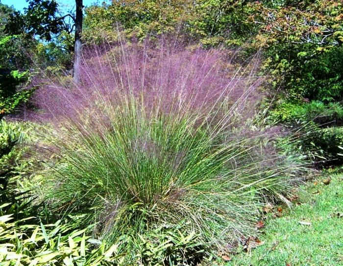gräser im garten lila nuance dekoration