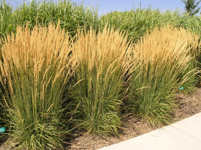 gräser im garten ornamtental dekorativ