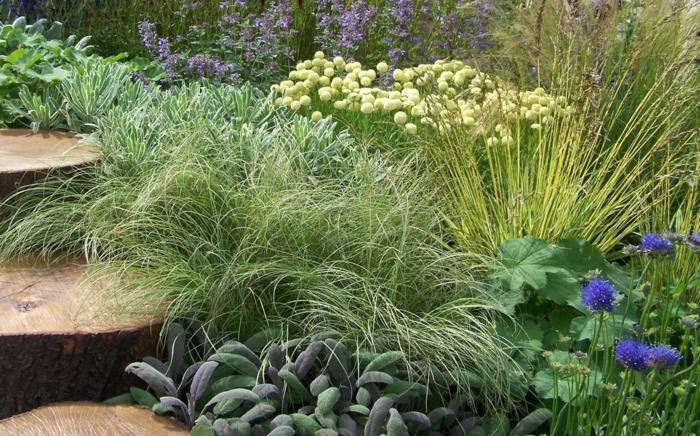 gräser im garten ornamtental naturgarten