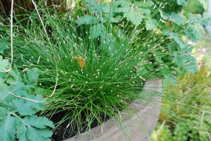 gräser im garten ornamtental pflanzkübel