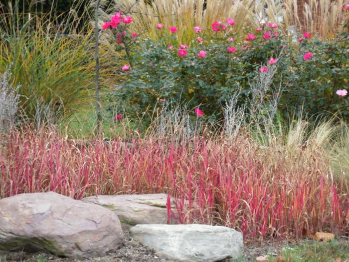gräser im garten rosen steine