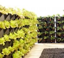 Grüne Wände – saftige, vertikale Gärten für Ihr Zuhause gestalten