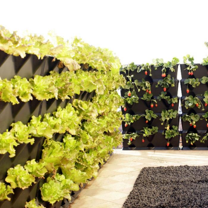 grüne wände buchstabe gemüsegärten vertikal