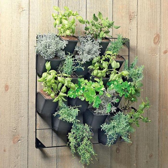 grüne wände gesunde kräuter wandgarten