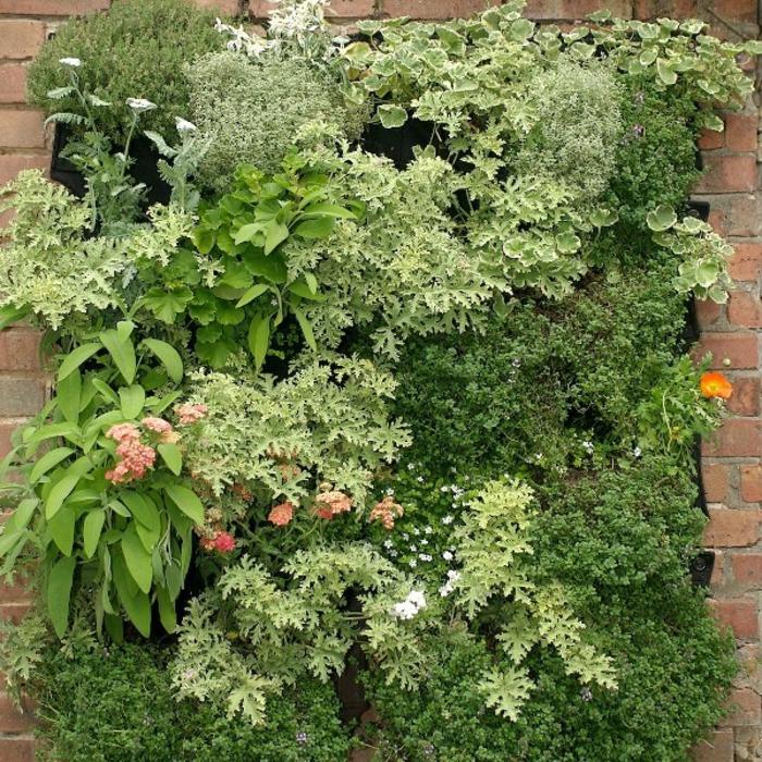 grüne wände kräuter blumen pflanzen vertikaler garten