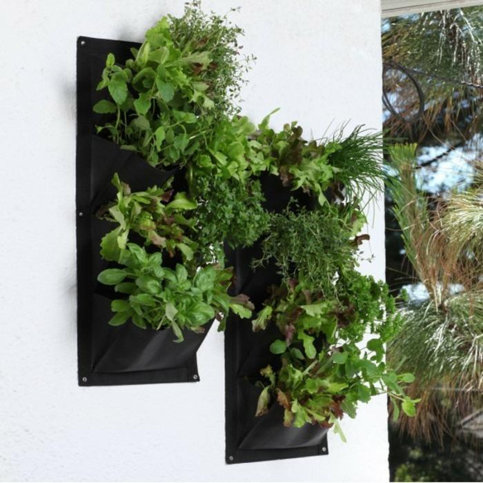 grüne wände vertikal garten kräuter