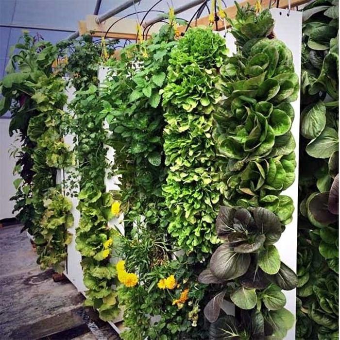 grüne wände vertikale gärten gemüse blumen