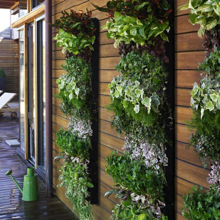 Grüne Wände Vertikaler Garten Pflanzen