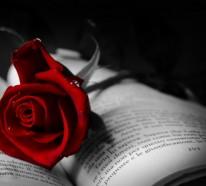 Rote Rosen – Sinnbild der Liebe und der Leidenschaft
