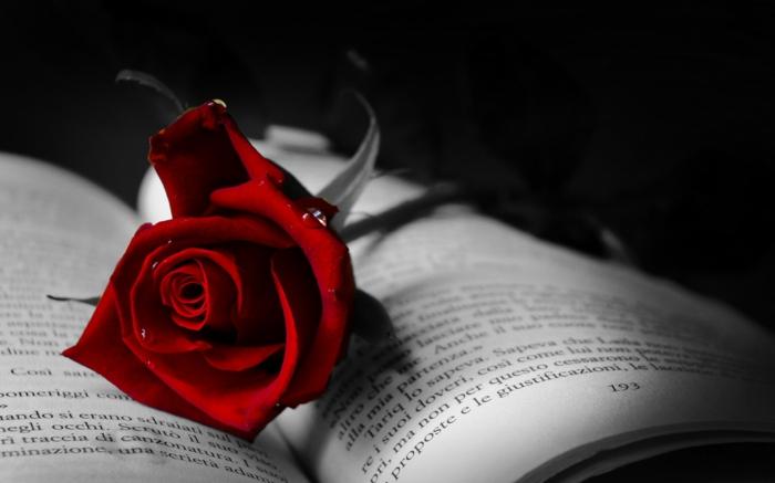 rote rosen geöffnetes buch romantisch wunderschön