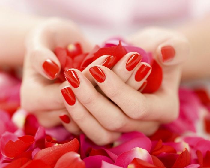 rote rosen romantik blütenblätter
