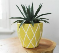 Ananas Pflanzen – In einen Blumentopf eine kleine Ananas einpflanzen