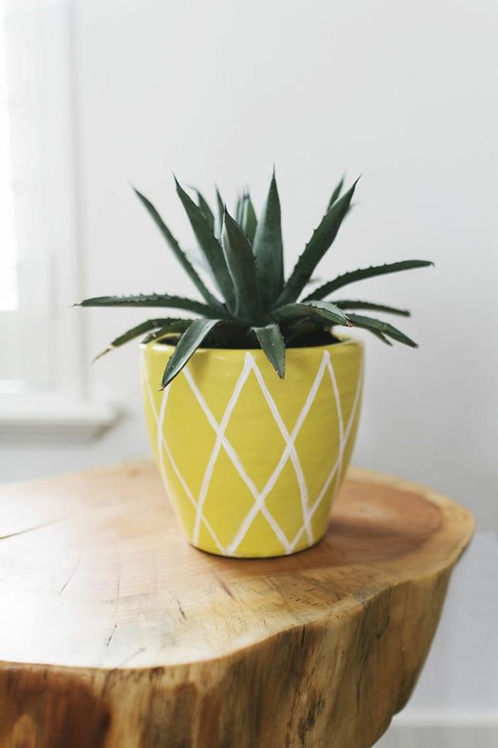 Ananas pflanzen in einen blumentopf eine kleine ananas for Zimmerpflanzen dekorativ