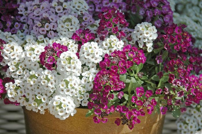 garten verschönern sommerblumen steinkräuter blumentopf